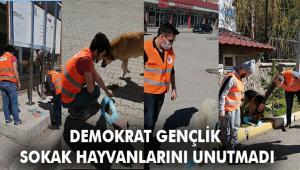 Her ilde sokak hayvanlarına destek olmayı planlıyor