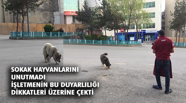 Sokak Hayvanları tam kapanmada da unutulmadı